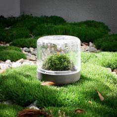 Bring the outdoors indoors with Botanica Boutique Sanctuary mossariums Mini Terrarium, Terrariums, Indoor Garden, Indoor Plants, Types Of Moss, Interior Plants, Lab, Outdoors, Boutique