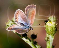 Butterflies av Birgitta Sjöstedt - Mostphotos