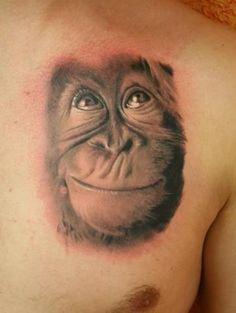 17 Best images about Monkey face on Pinterest | Eyes ...