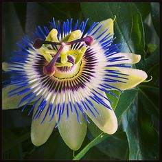 Image result for strange and interesting flowers