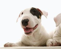 5 HOMEOPATHIC REMEDIES FOR YOUR PET  #pets  #homeopathic