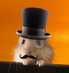 grappige hamsters - Google zoeken
