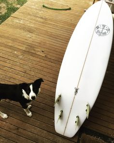 #wing but getting the seal of approval. Just out the shed.  Looking forward to getting on this bad boy. #rsd #surfboards #portfairy by mulletcocktail http://ift.tt/1UokfWI