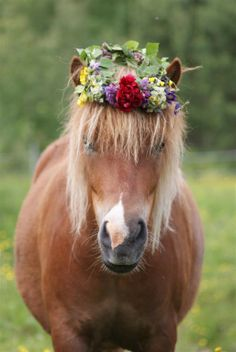 "BOHO: THE  Filly SINGS A happy HIPPY Medley TO HER LOVE:  ""[When] you go to San Francisco""  Be sure to wear some flowers in your hair"" •••• ""Ooh! I'm feeling so groovy now that we are finally gettin together!"""