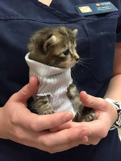 Kitten Saved from Hurricane Matthew Gets Tiny Sweater and New Home