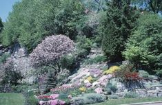 Hillside landscaping presents several challenges to gardeners. Plants must hold soil against erosion caused by wind, water or both. Access…