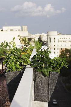 Saco Alforja Mh (20x20x12cm) para el balcón + Manual Agricultura Urbana digital: Amazon.es: Jardín Sidewalk, Plants, Garden Design, Culinary Herb, Coir, Urban Farming, Side Walkway, Walkway, Plant