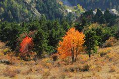VAL CHISONE - Autunno in valle #autumn #automne #valchisone #sestriere #pragelato #torino #roreto #balma #villaretto #Castel de Bosco #Fenestrelle #pinerolo