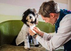 Dog being dressed for wedding Voewood wedding. Click to see more from this cute wedding! Cat Wedding, Wedding Wishes, Wedding Looks, On Your Wedding Day, Spring Wedding, Dog Wedding Outfits, Wedding Venues, Wedding Photos, Wedding Photographer London