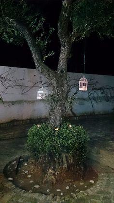 Cortijo Las Arenillas, Sevilla. Alojamiento Rural 13 plazas. Reservas: 645579137