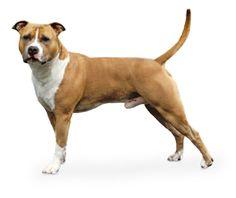 Enciclopedia de Razas / El Perro / El Cachorro y el Perro / Royal Canin Mexico - Royal Canin