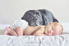 newborn lifestyle shoot with dog - Google Search
