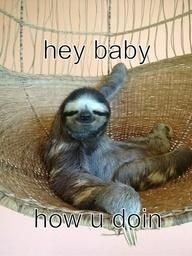 sloth Source by younglizkhalifa Funny Animal Memes, Cute Funny Animals, Cute Baby Animals, Sloth Memes, Baby Sloth Pictures, Cute Baby Sloths, Silly Photos, My Spirit Animal, Sloth Stuff