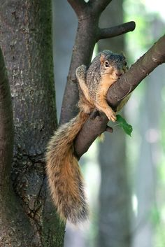 I just need to relax:  I AM A SQUIRRELl!   I am NOT afraid of heights! ......  But oh,  how far up I am.........   deep breaths---deep breaths...... I'm gona be ok........