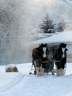 Clydesdale's                                                                                                                                                      More