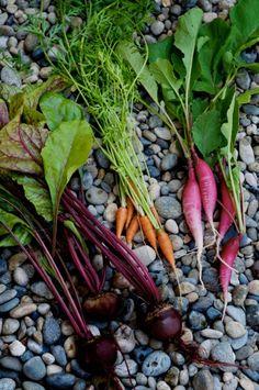 Salad of Edible Radish, Beet  Carrot Top Greens – Exciting, No Waste Recipes