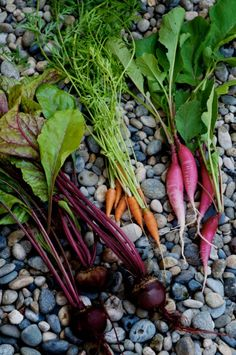 Salad of Edible Radish, Beet Carrot Top Greens – Exciting, No Waste Recipes