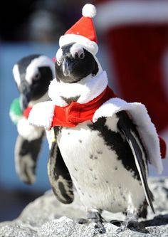 2007 best Penguins for Lauren images on Pinterest | Penguin love ...