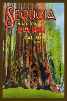 Sequoia National Park 1935. Quilt Blocks printed on cotton for quilters. Ready to Sew.  Single 4x6 quilt block $4.95. Set of 4 quilt blocks with free wall hanging pattern $17.95.