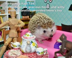 Twenty Incredible Hedgehog Facts That Will Astound You Happy Hedgehog, Hedgehog Pet, Cute Hedgehog, Guinea Pig Toys, Guinea Pigs, Hedgehog Facts, Homemade Cat Toys, Cute Animals, Small Animals
