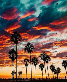 Palm trees / cloudy sky