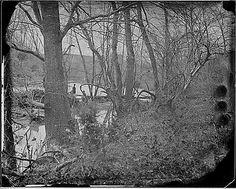 Wilderness, near Chancellorsville, Virginia (1860-1865)