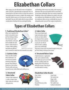 Types Of Collars For Dogs After Surgery