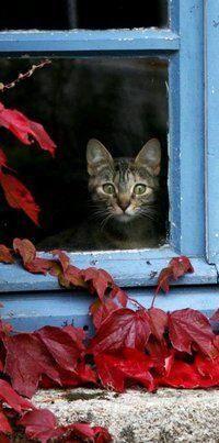 Lovely-KittyCats, trem-das-cores: gatinho na janela