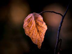 ** Single Leaf ** - null