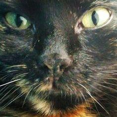 #knowing #cats #catmagic #catsofinstagram #instacat #katze #katzenmagie #hypnose #cathypnosis #katzenhypnose #hypnosis Cats Of Instagram, Pictures, Animals, Cats, Photos, Animales, Animaux, Animal, Animais