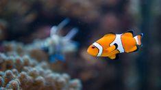Home - Aquarium Fish Home Aquarium Fish, Aquarium Shop, Fish Tank Accessories, Biorb, Underwater Fish, Beautiful Fish, Pets, Animals, Tinkerbell