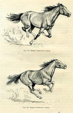 Horse Drawing Tutorial, Horse Pencil Drawing, Horse Drawings, Animal Drawings, Art Drawings, Drawing Art, Pencil Art, Animal Sketches, Art Sketches