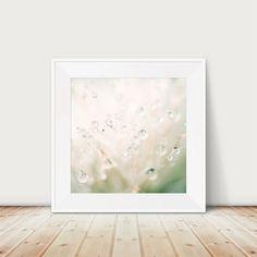 winter dandelion photograph mint green winter by oohprettyshiny