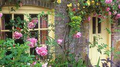 cottage garden roses around the door