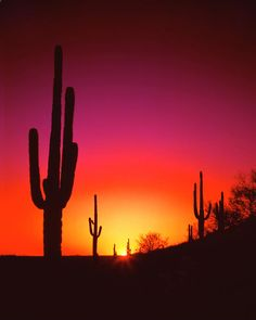 ✯ Fiery Summer Sunset in the Arizona Desert near Phoenix