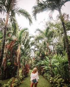 """1,697 Likes, 71 Comments - JORDAN ✦ Australia (@jordaaaan_) on Instagram: """" We spent this day running through a palm tree haven in the pouring rain - feeling more alive than…"""" #cookislands #island #paradise #instagram #tropical #inspo #rainforest #palmtree #travel"""
