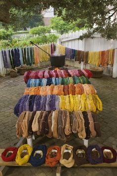 Dyed yarn drying in the sun. Edna wandering through betta's sun, before she folds her small boat.