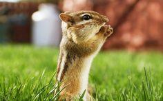 beautiful animals | Beautiful Animals Wallpapers HD Desktop Widescreen Free Download