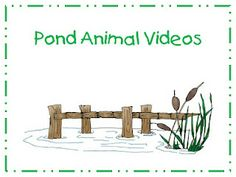 The students in my class gather information through discovery bags, the pond site on my website and videos. I have a small dvd player that . Kindergarten Science, Science Classroom, Teaching Science, Science Activities, Preschool Education, Teaching Resources, Pond Video, Pond Habitat, Pond Animals