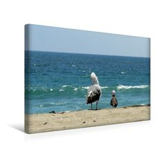 Möwen am Strand von Malibu (USA) (Premium Foto-Leinwand  45x30 cm)
