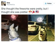 This beauty: | 19 Memes Your Dog Will Probably Relate To