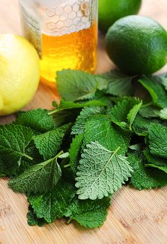 Natural cures, natural healing, herbal essences, herbal remedies, health re Natural Cures, Natural Healing, Mosquito Repelling Plants, Herbal Essences, Lemon Balm, Cold Sore, Honey Lemon, How To Squeeze Lemons, Herbal Remedies