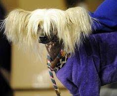 136th Westminster Dog Show - Photos - SI.com