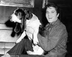 Elvis and another canine friend, something s funny