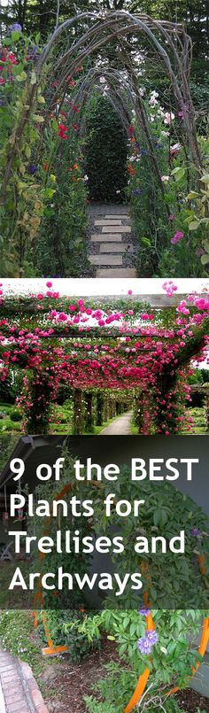 9-of-the-BEST-Plants-for-Trellises-and-Archways-1.jpg 400×1.366 pixels