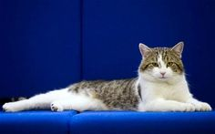 Larry the cat is installed as Downing Street Chief Mouser