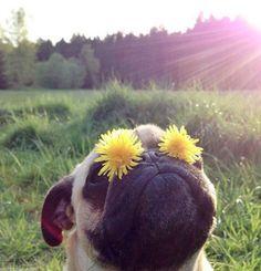 http://ofabulosodestinodemariaamelia.pt/ #pugs