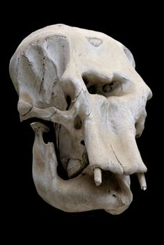 It's no mystery to figure out why it is believed a prehistoric elephant skull started the Cyclops myth Animal Skeletons, Animal Skulls, Elephant Anatomy, Skeleton Pics, Crane, Elephant Skull, Animal Bones, Human Skull, Sketch Painting