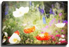 Magic Poppies by Jenndalyn Painting Print on Wrapped Canvas