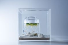 Japanese designer Haruka Misawa has created Waterscape, a series of stunning translucent square fishbowls that blow conventional aquariums out of the w ...